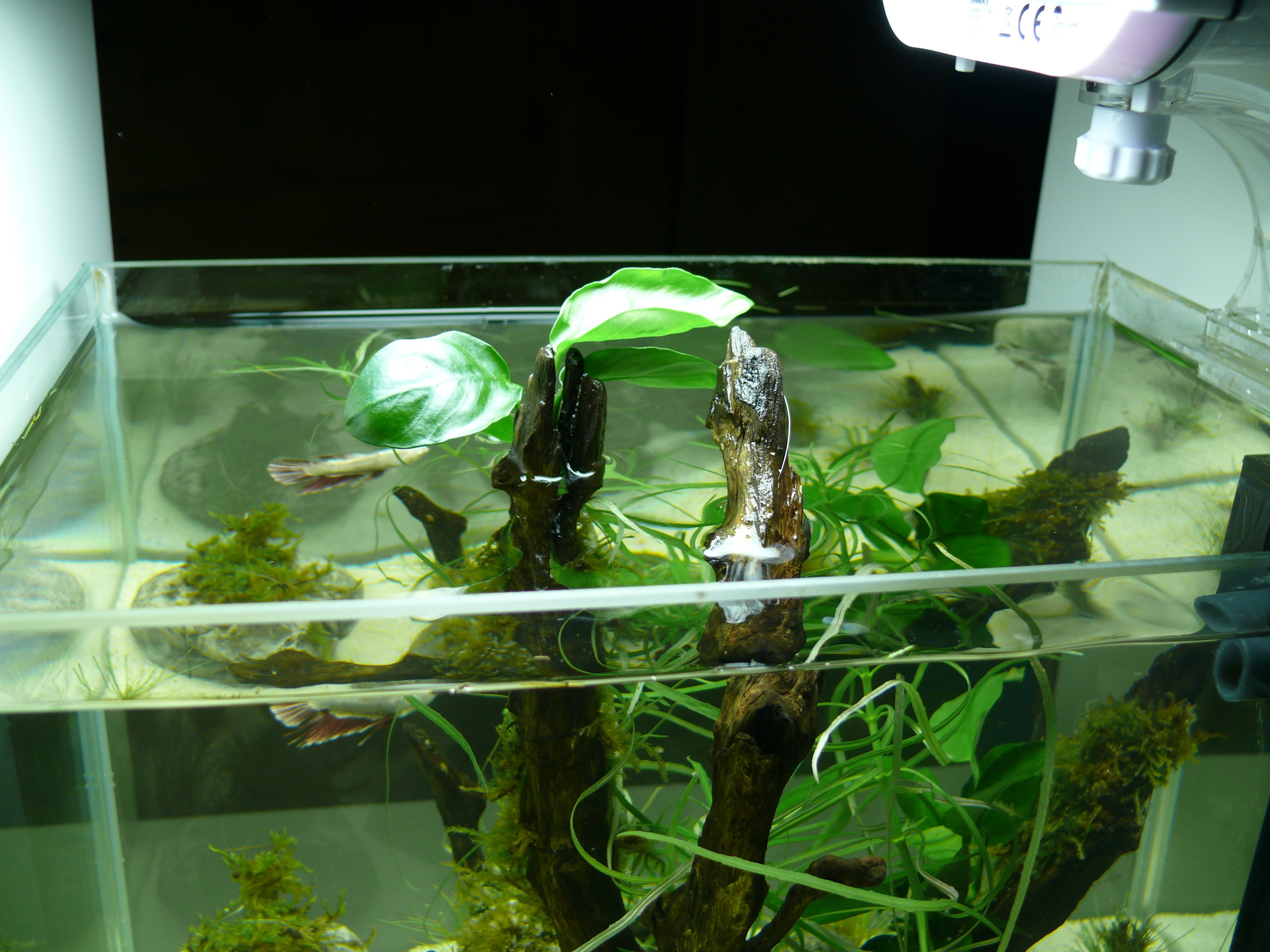 Erstes 12l Aquascape Aquascaping Einsteiger Aquascaping Forum