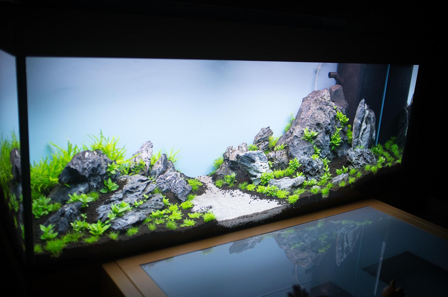 Aquarium Einrichten 240l Zuhause Image Ideas