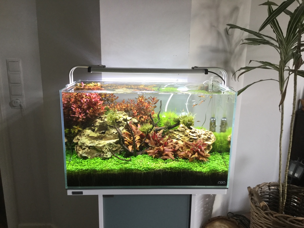 fadenalgen im 60p was tun jetzt ein moos problem algen im aquarium aquascaping forum. Black Bedroom Furniture Sets. Home Design Ideas