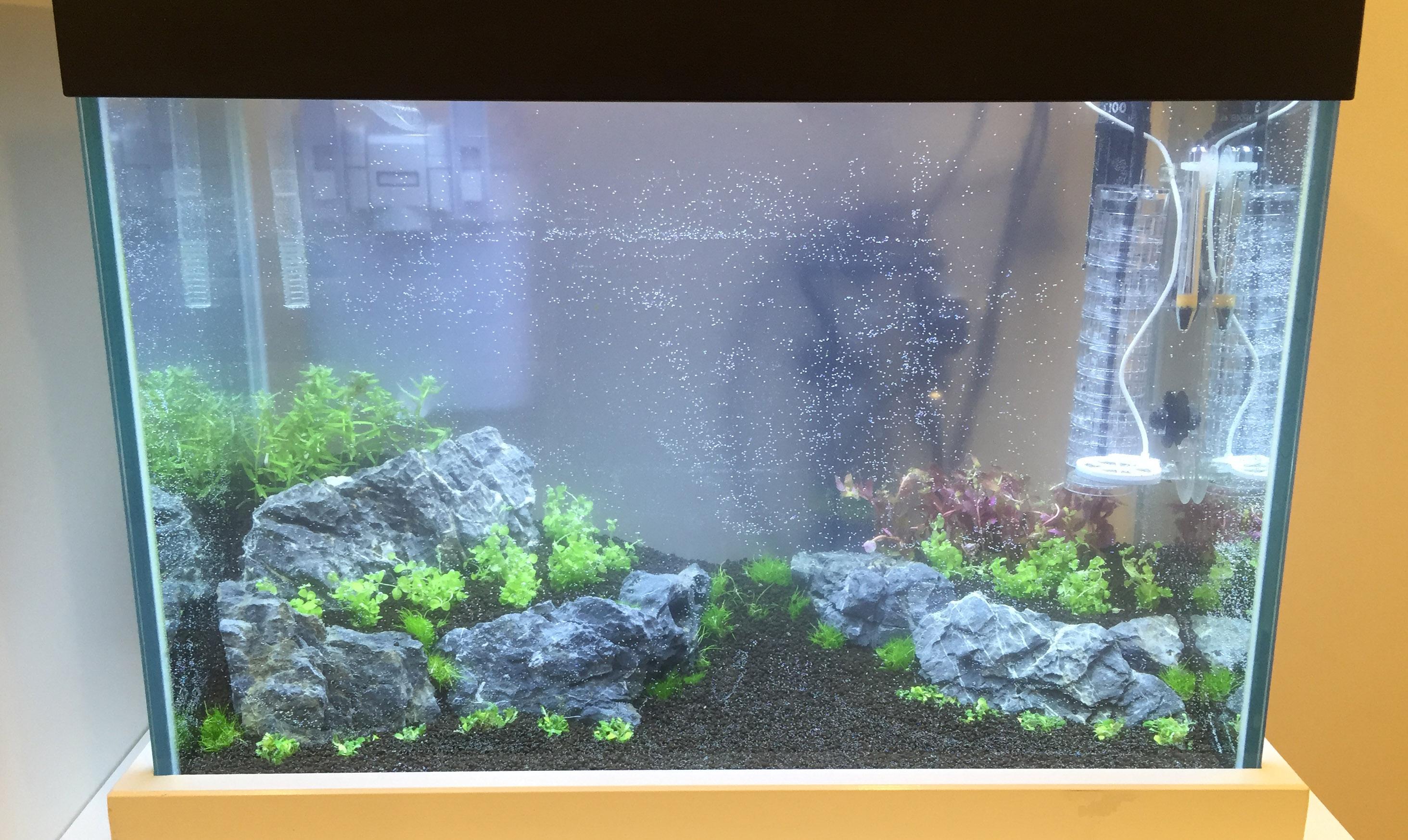 Einlaufphase aquarium seite 2 aquascaping einsteiger for Aquarium einsteiger
