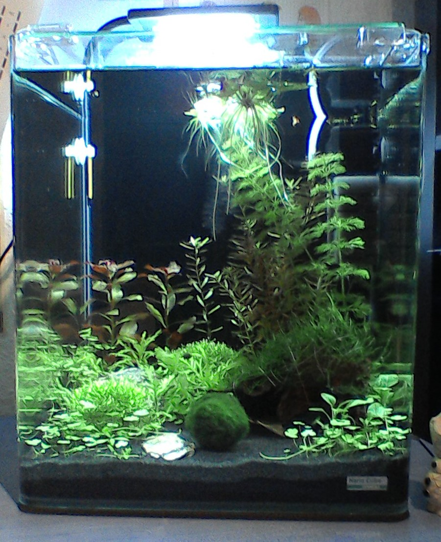 mein erstes aquarium ein kleines nano aquarienvorstellung aquascaping forum. Black Bedroom Furniture Sets. Home Design Ideas