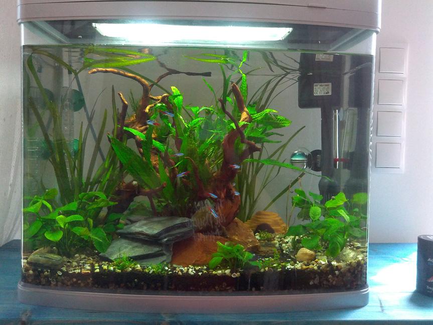 entscheidungshilfe bei beleuchtung 50 l aquariumbeleuchtung aquascaping forum. Black Bedroom Furniture Sets. Home Design Ideas