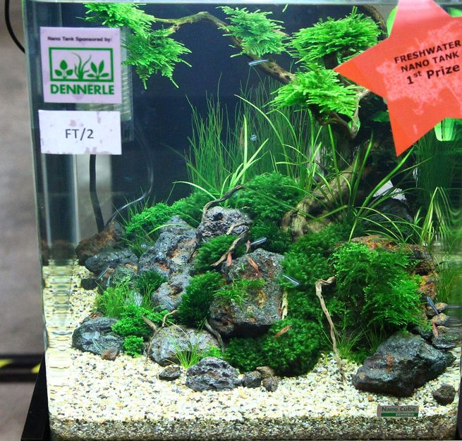 nano cube 30l stone heaven aquarienvorstellung aquascaping forum. Black Bedroom Furniture Sets. Home Design Ideas
