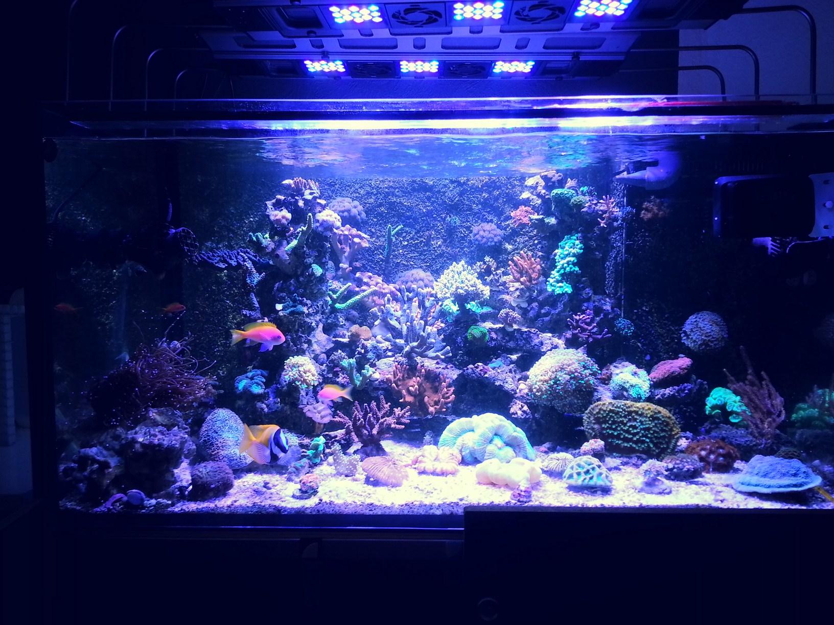 Umsteiger vom meerwasser aquascaping einsteiger for Aquarium einsteiger