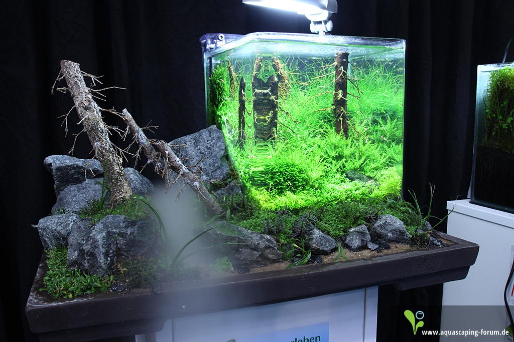 The Art Of The Planted Aquarium 2013 Nano Aquarien Bildergalerie