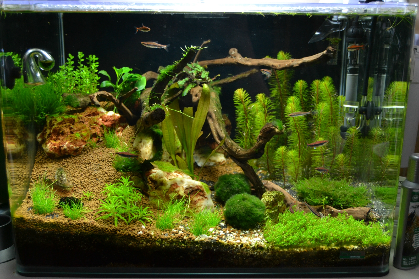 Scaper`s Tank 1 - Aquarienvorstellung - Aquascaping Forum