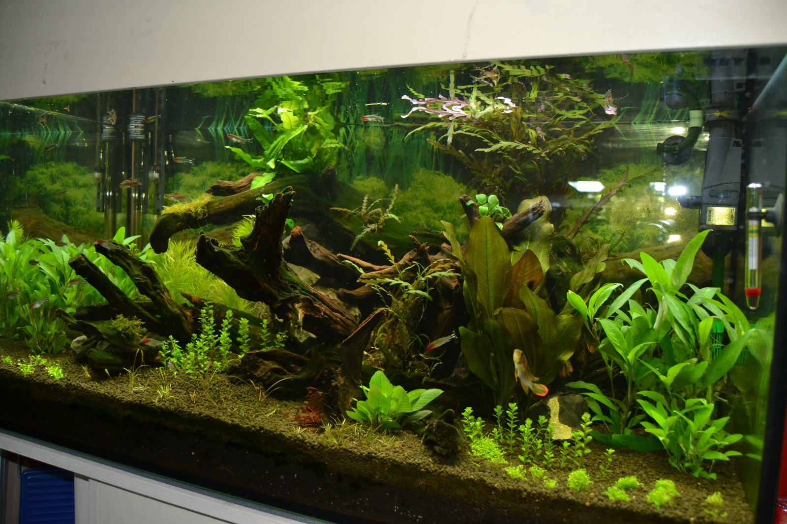 250 liter aquascape aquarienvorstellung aquascaping forum. Black Bedroom Furniture Sets. Home Design Ideas