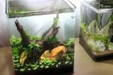 30l nano aquarium green moon aquarienvorstellung aquascaping forum. Black Bedroom Furniture Sets. Home Design Ideas