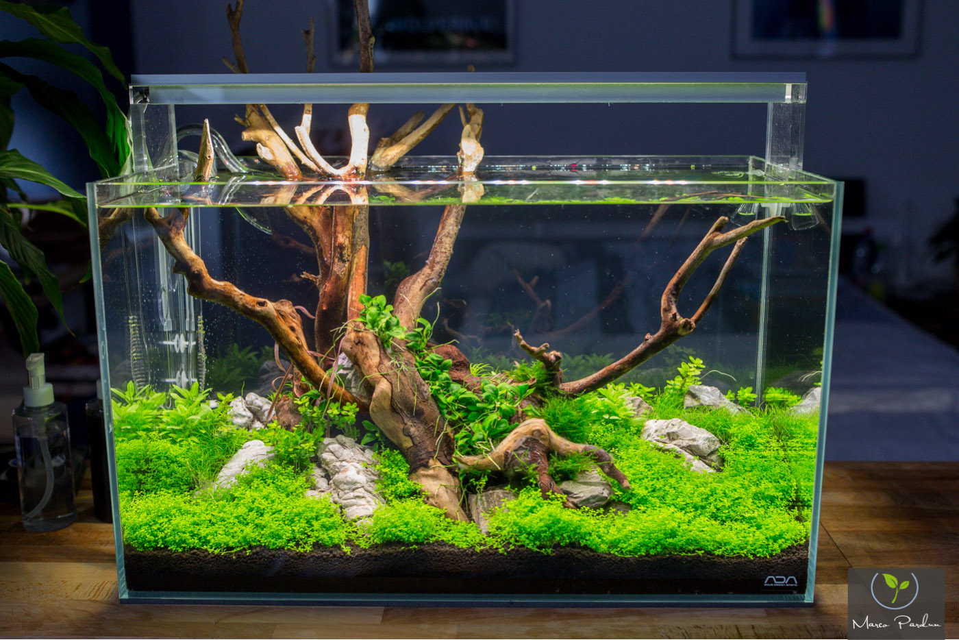 https://www.aquascaping-forum.de/index.php?page=Attachment&attachmentID=2672