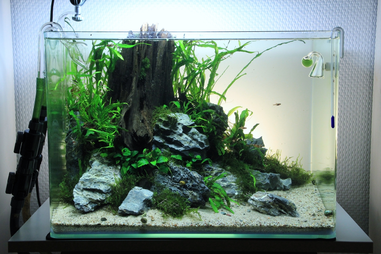 43l lowtech aquascape aquarienvorstellung aquascaping forum - Aquarium ideen ...