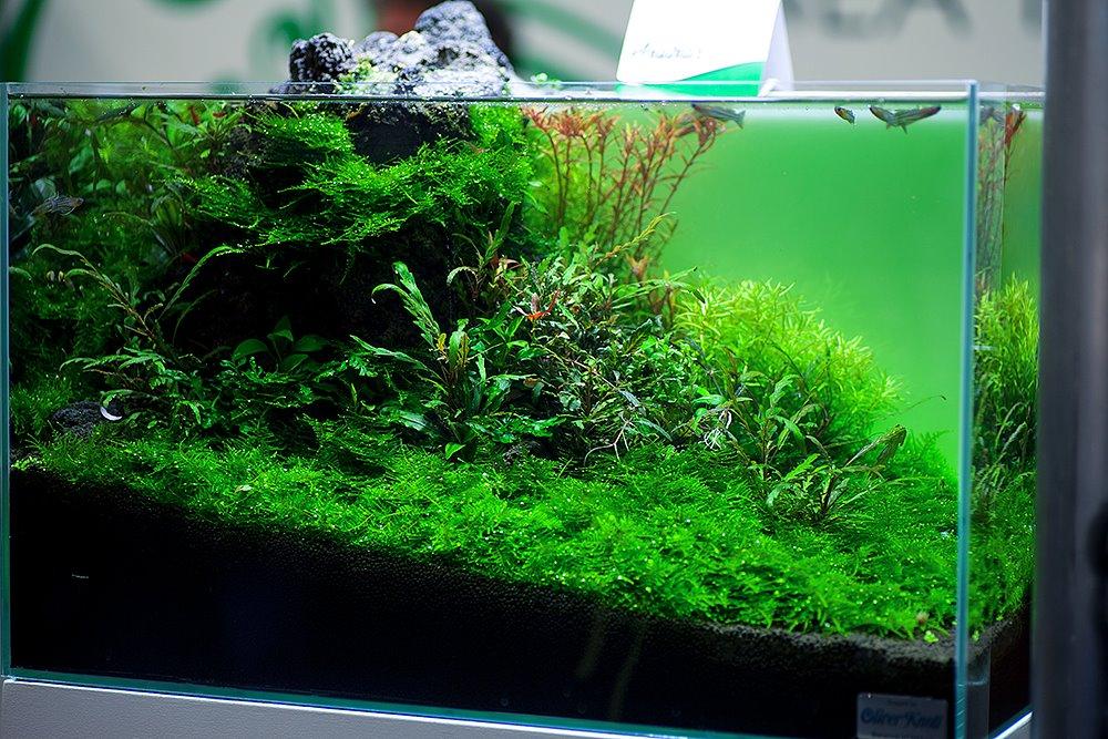 Bodendecker Bei Wenig Licht Wasserpflanzen Allgemein