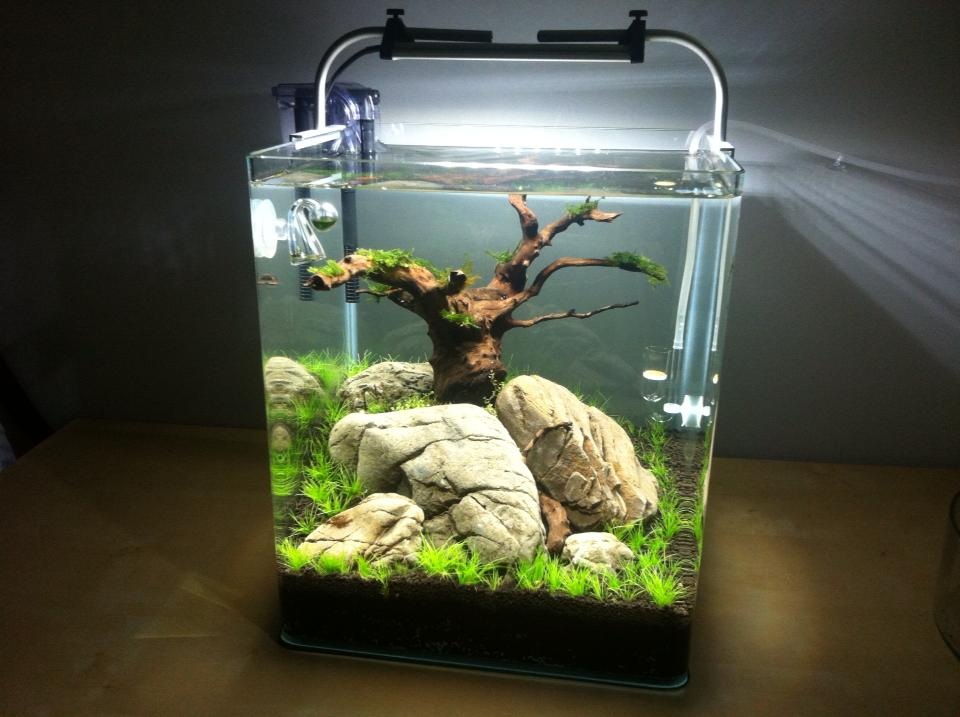 30l nano aquarium sleepy hill seite 2 aquarienvorstellung aquascaping forum. Black Bedroom Furniture Sets. Home Design Ideas