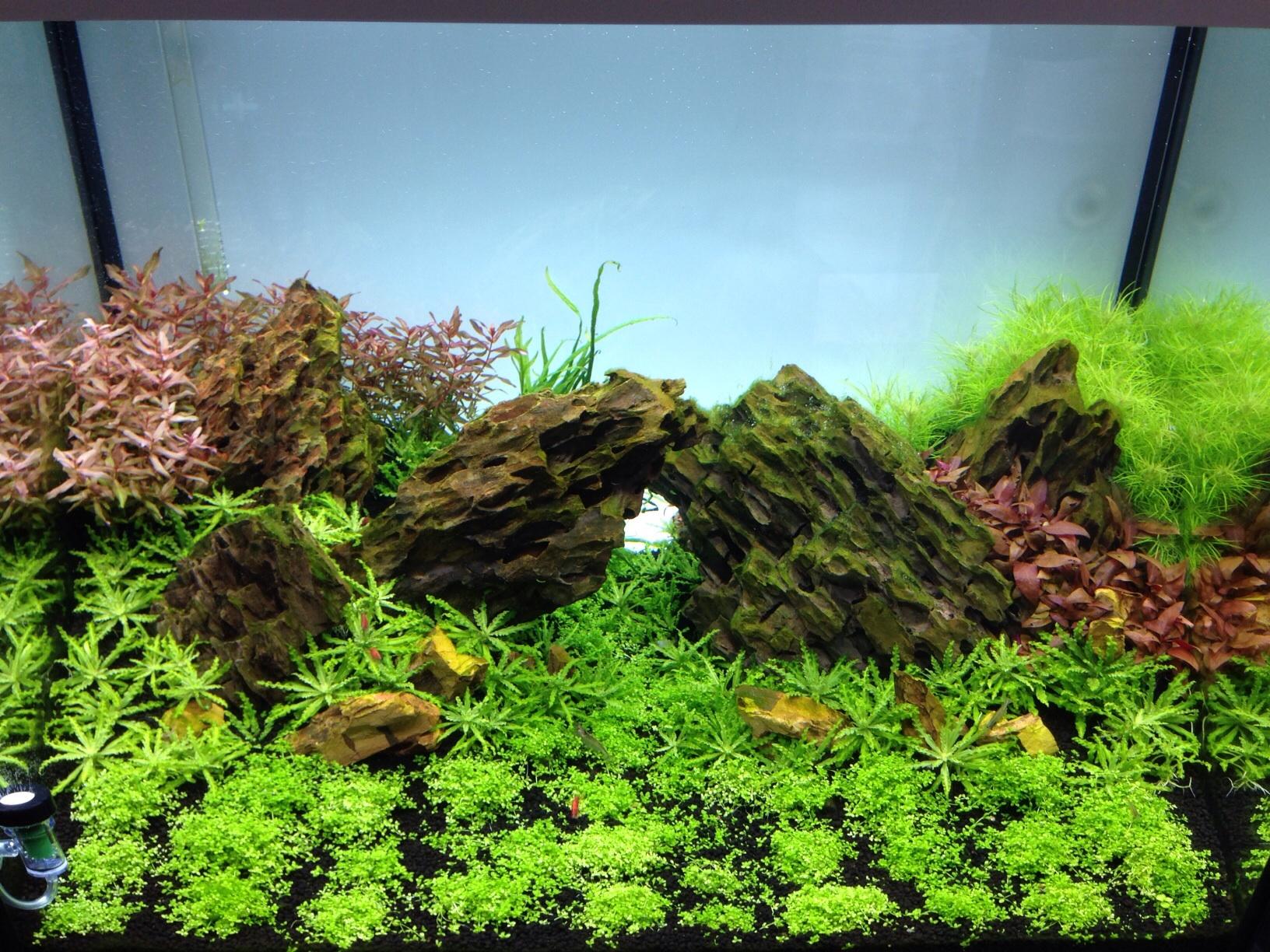 ... 200 Scapingtime - Seite 2 - Aquarienvorstellung - Aquascaping Forum