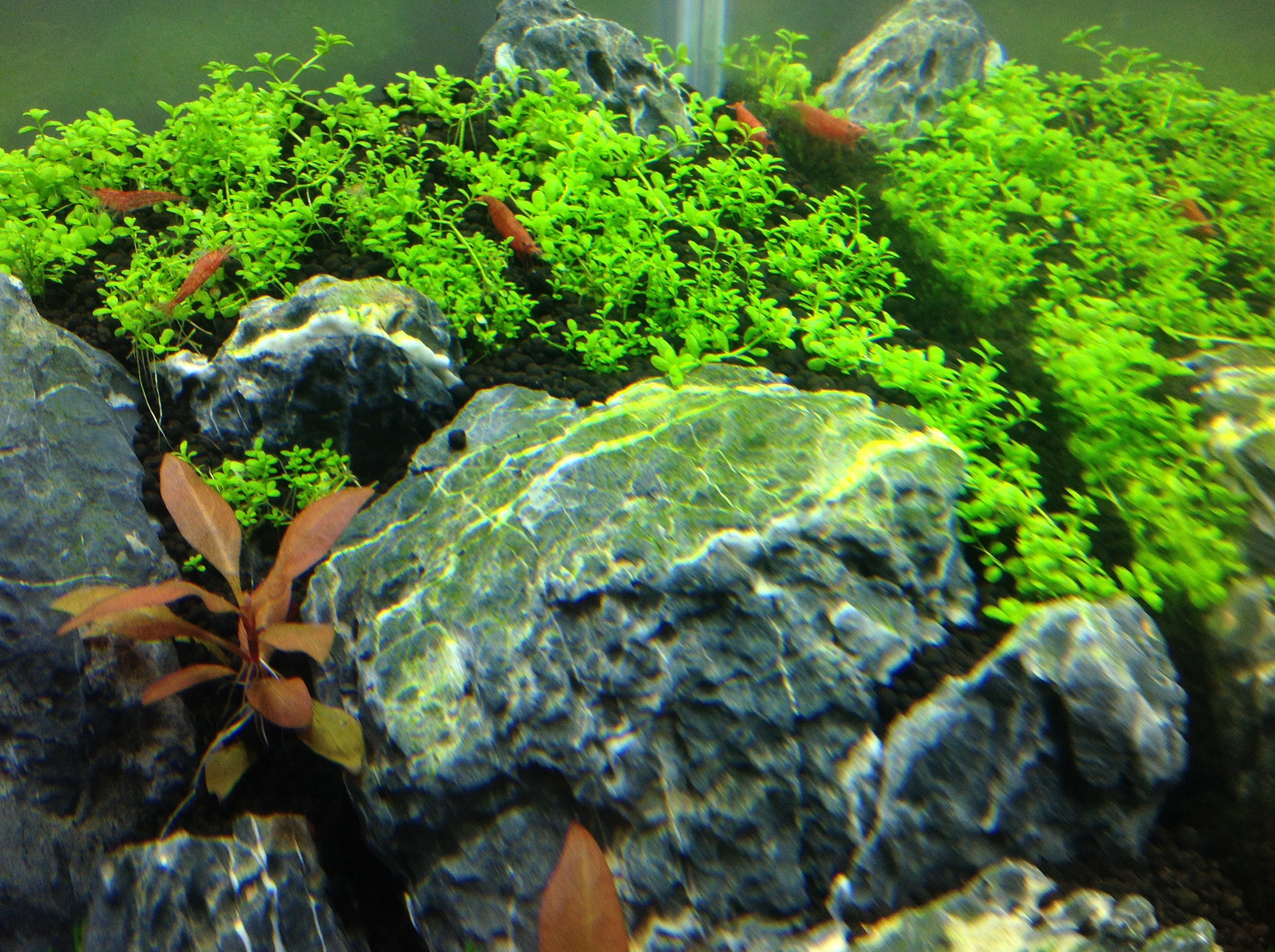 glaub ich bekomme auch langsam algen algen im aquarium aquascaping forum. Black Bedroom Furniture Sets. Home Design Ideas