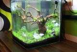 dennerle nano cube 30l aquarienvorstellung aquascaping forum. Black Bedroom Furniture Sets. Home Design Ideas