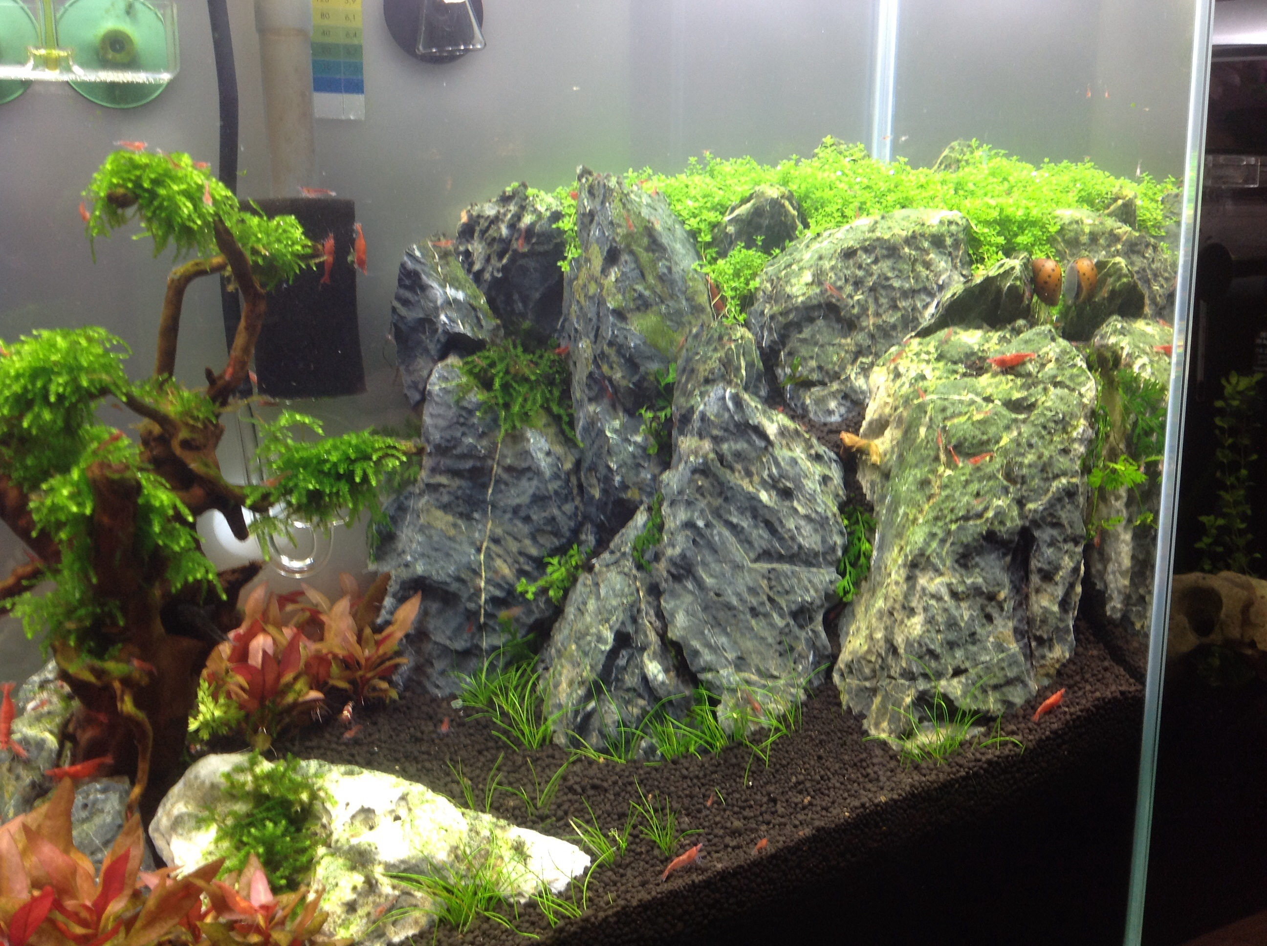 hilfe bei pinselalgen algen im aquarium aquascaping forum. Black Bedroom Furniture Sets. Home Design Ideas