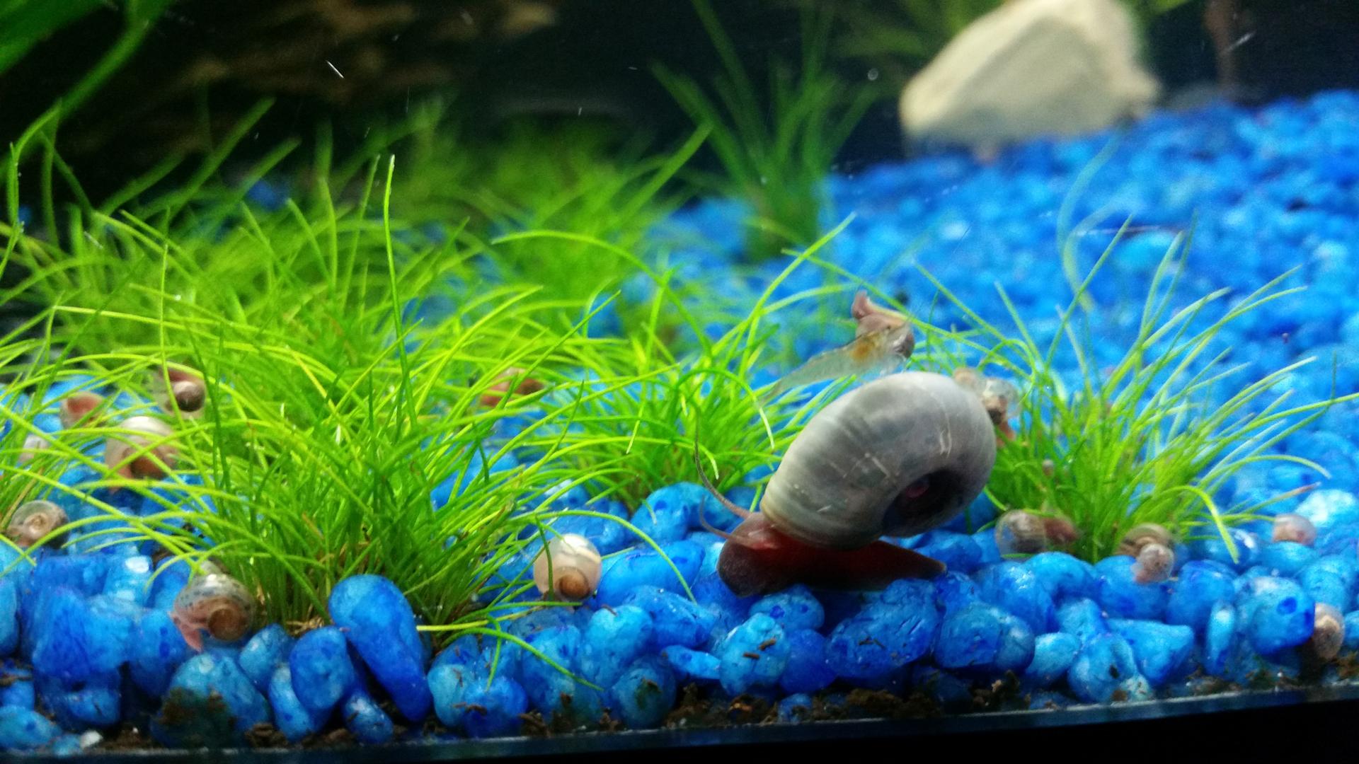 ... ....PLANARIEN!!! - Seite 2 - Algen im Aquarium - Aquascaping Forum