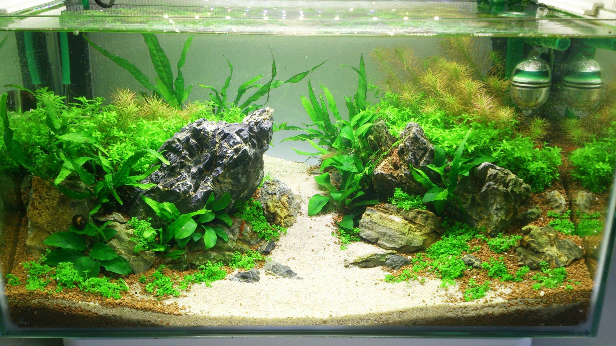 mein kleiner einstieg ins aquascaping 25 liter aquarienvorstellung aquascaping forum. Black Bedroom Furniture Sets. Home Design Ideas