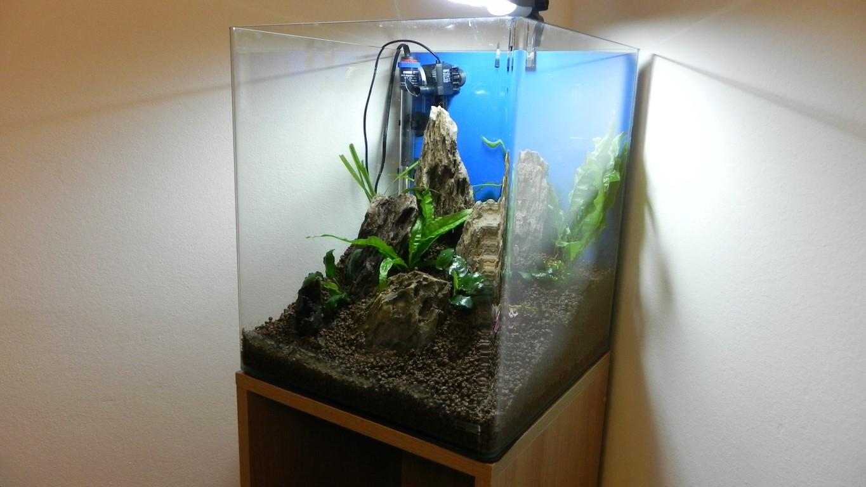 60 Liter Cube - Garnelenzucht, neuer Versuch - Aquarienvorstellung ...