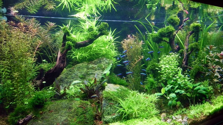 Diy Led Lampe Selber Bauen Seite 30 Aquariumbeleuchtung