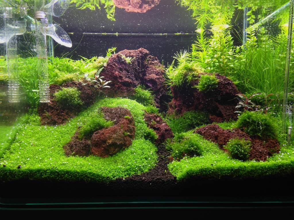 35L Aquascapertank mit Lava - Aquarienvorstellung ...
