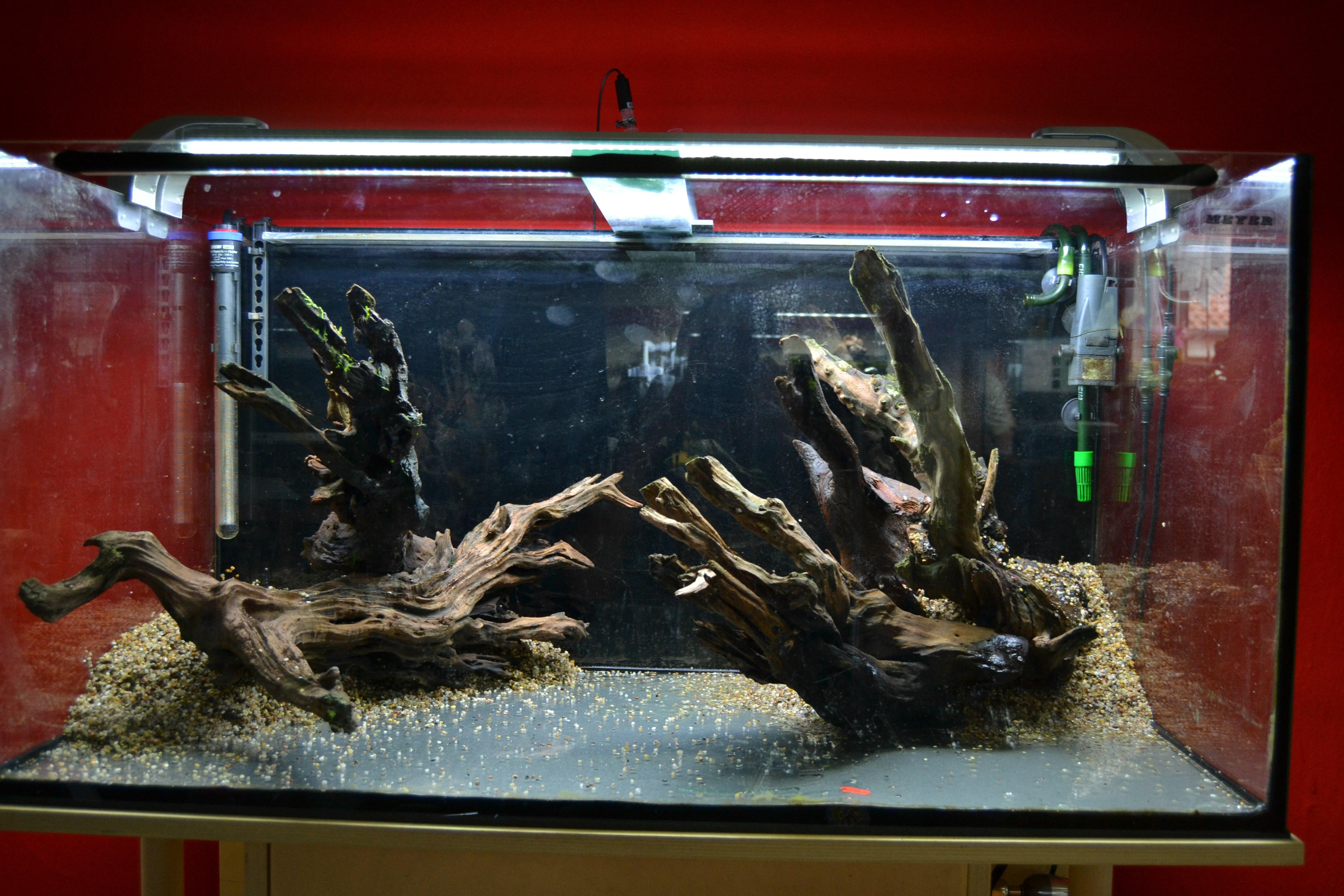 Biotop aquarium rio negro aquarienvorstellung for Aquarium einrichtungsideen