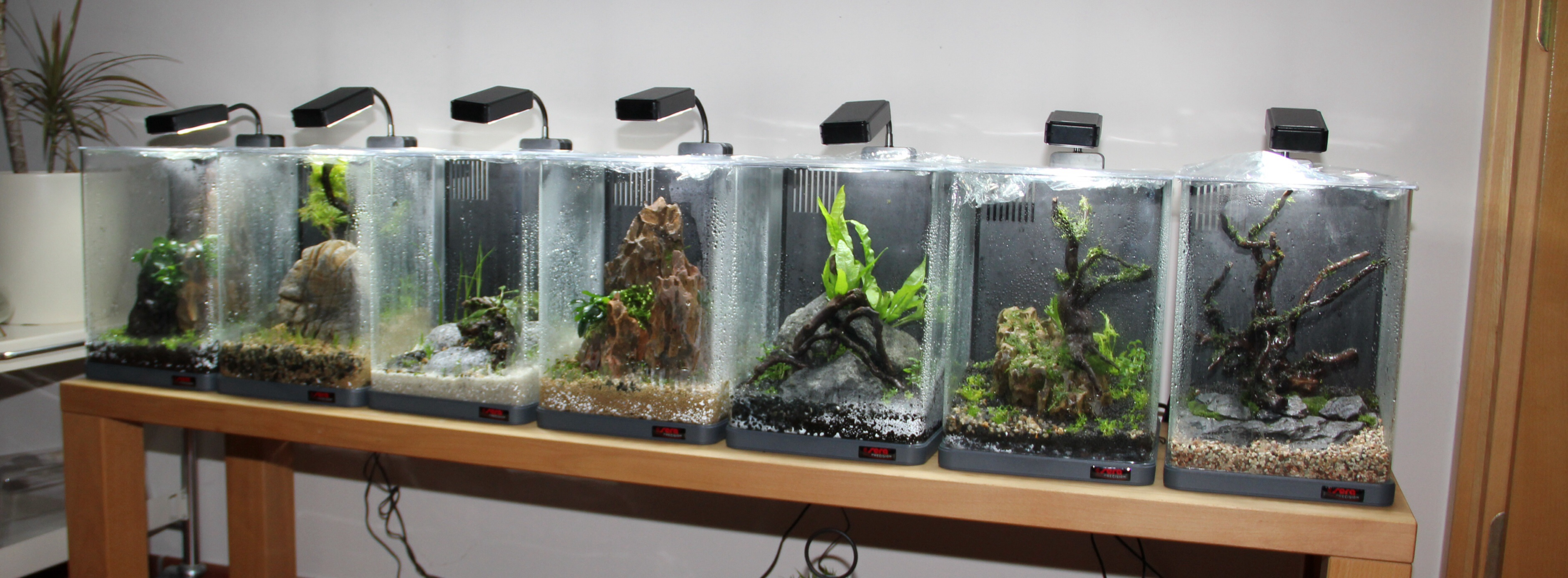 Meine Messe Zwerge - Off Topic - Aquascaping Forum