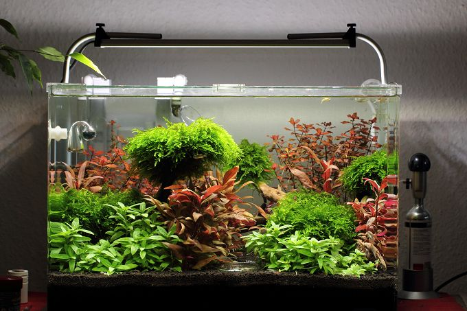 daytime cluster oder aqualantis easy led aquariumbeleuchtung aquascaping forum. Black Bedroom Furniture Sets. Home Design Ideas