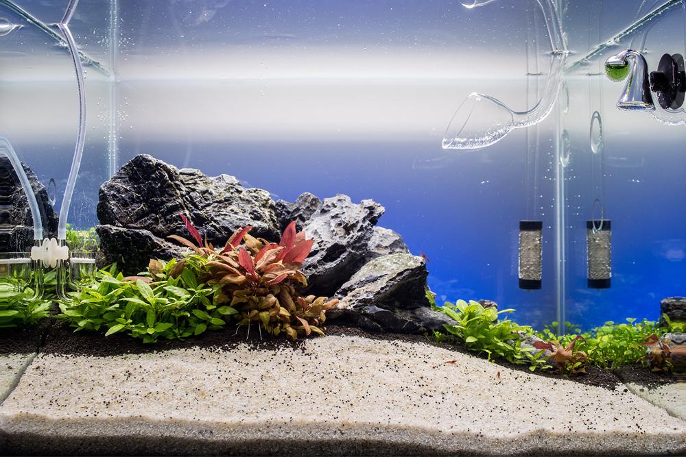 Namensloses Scape - Aquarienvorstellung - Aquascaping Forum