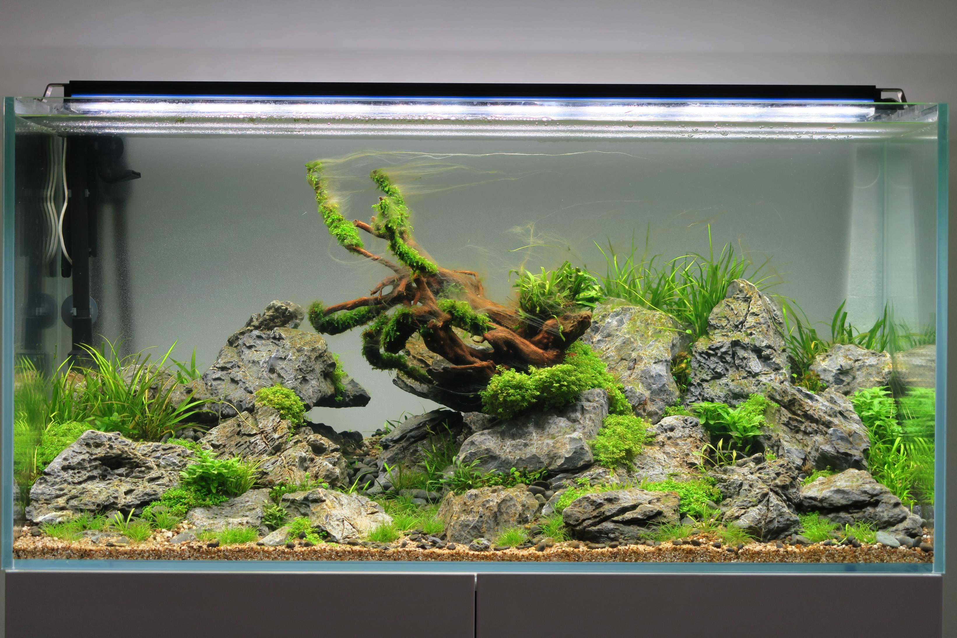 hilfe bei algen 3 wochen nach einrichtung algen im. Black Bedroom Furniture Sets. Home Design Ideas