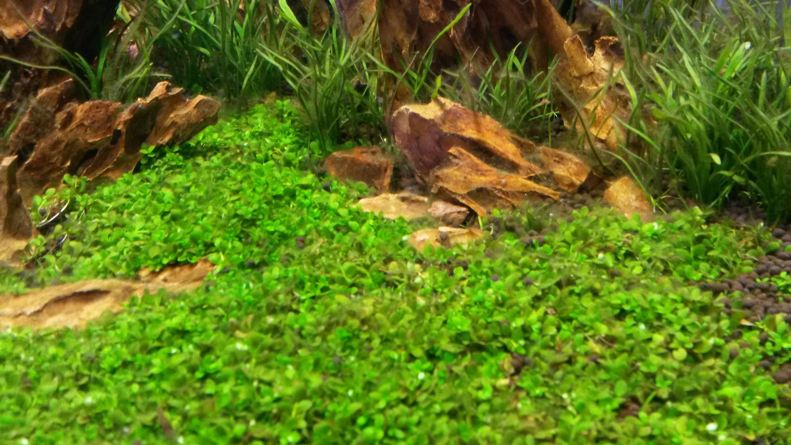 Rat und Tat - Algen im Aquarium - Aquascaping Forum