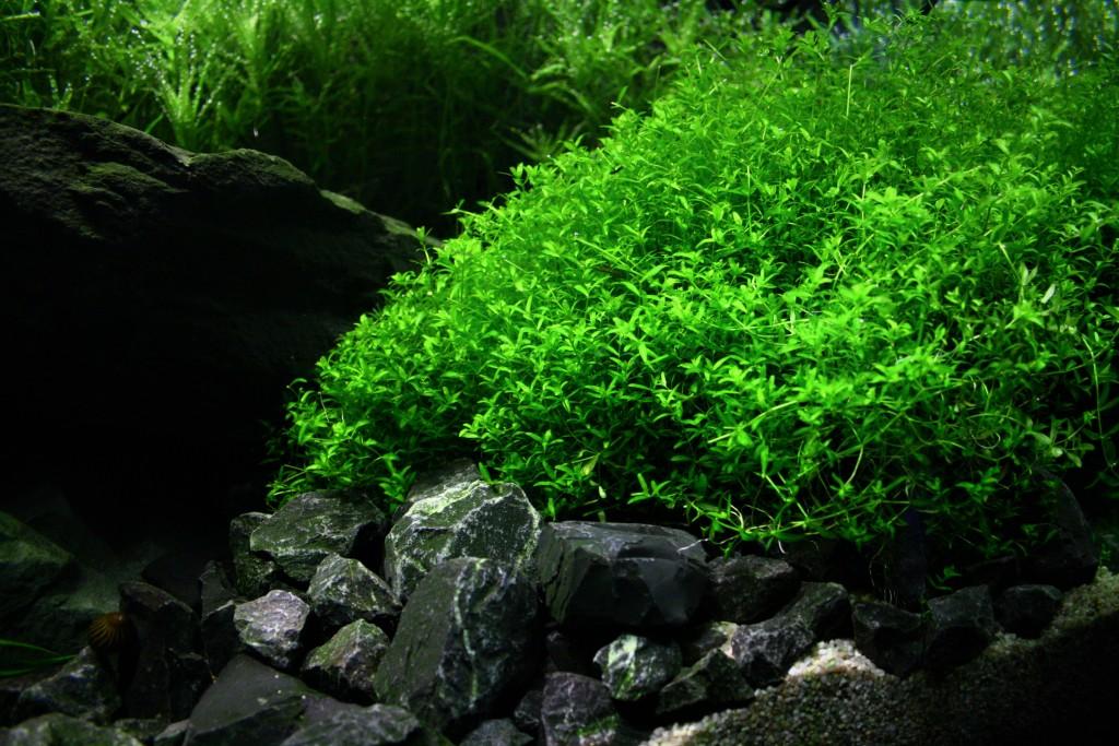 Die 5 Besten Aquariumpflanzen Fur Anfanger Wasserpflanzen